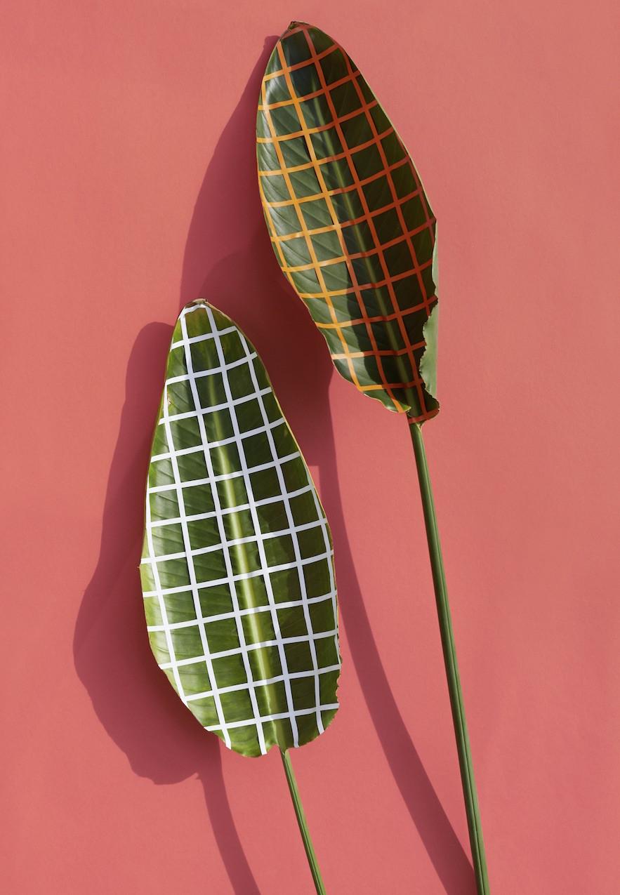 wonderplants by sarah illenberger gestalten. Black Bedroom Furniture Sets. Home Design Ideas